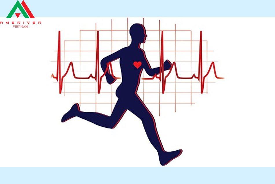 Nhịp tim có sự khác nhau rất lớn khi nghỉ ngơi và vận động